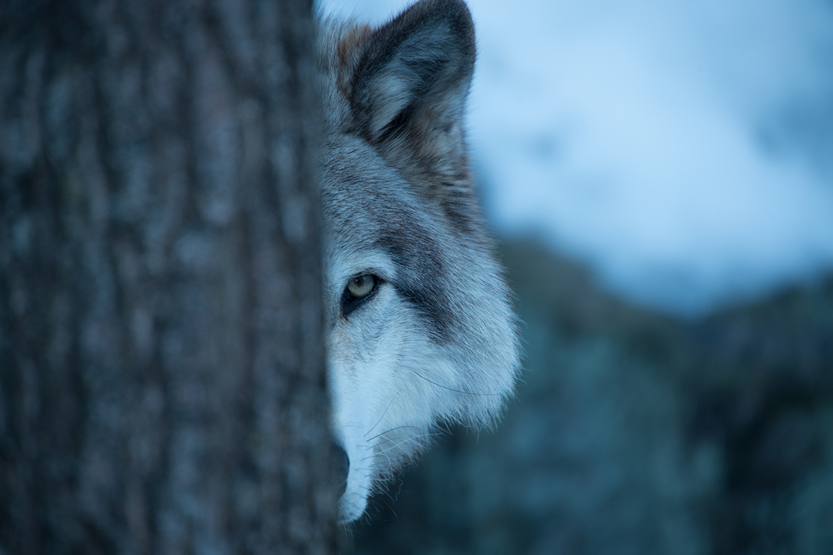 WOLF.SEHER